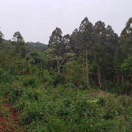 Comprar - Área de terras